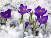 31 марта — Кирилл - Дери полоз