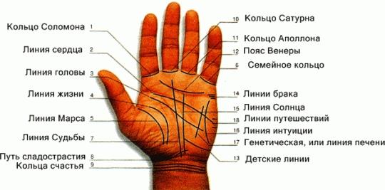 Хиромантия линия брака и линии детей на руке 26